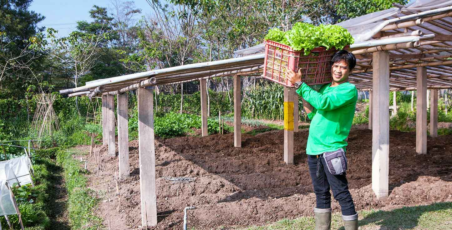 Organic Farming West Java